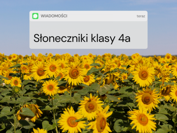Read more about the article Słoneczniki kl. 4a